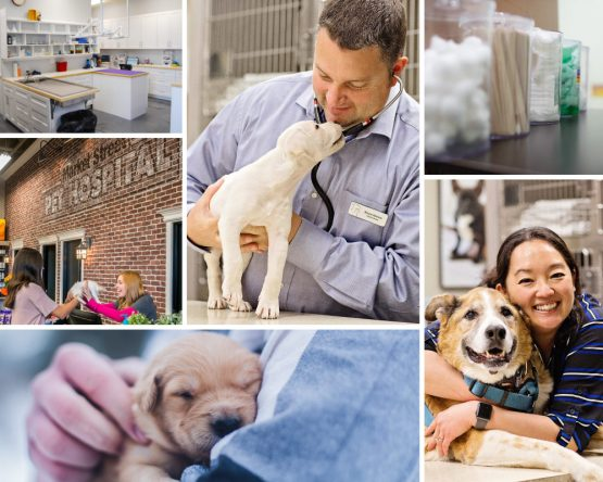 collage of pictures with PET DEPOT veterinarians